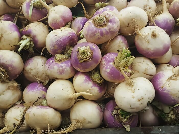 Turnips - fastest growing plant