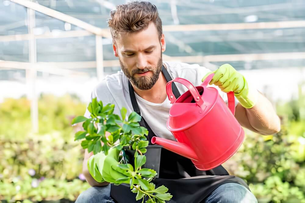 when to water your plants