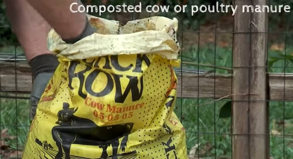 Composted cow or poultry manure