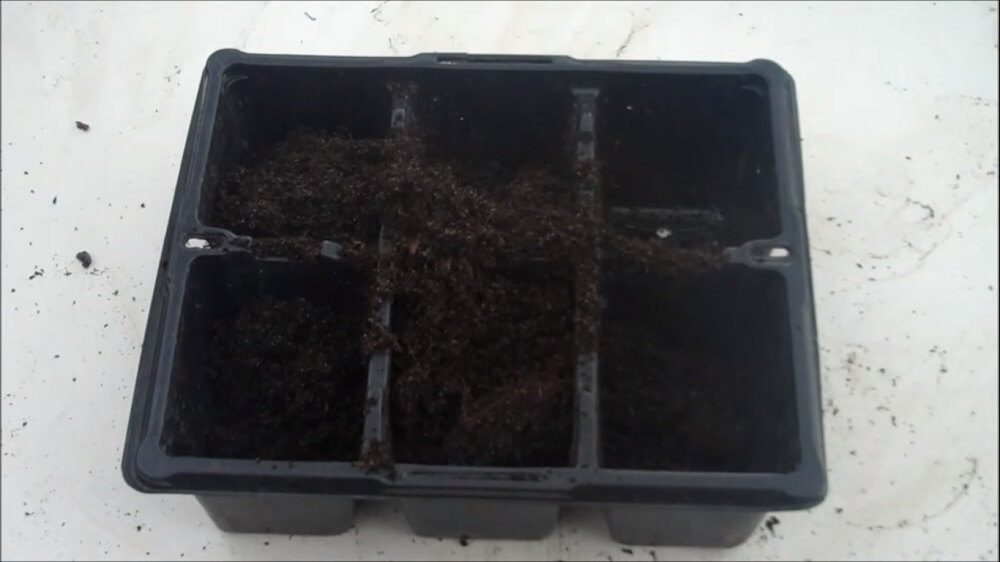 Fill a seed tray with compost