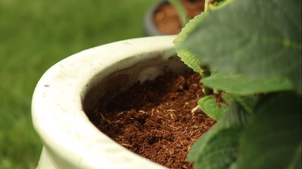 Potting mix required to plant hydrangeas