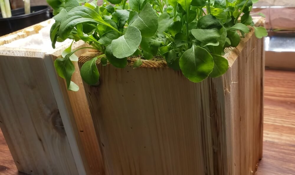Pot and Containers selection to grow Arugula indoors