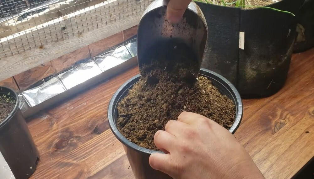 Soil & Container requirement to grow Garlic indoors
