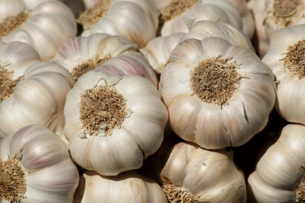 How to harvest, cure and store garlic